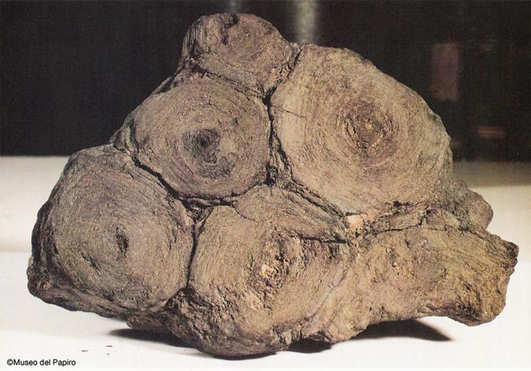 papiros-carbonizados
